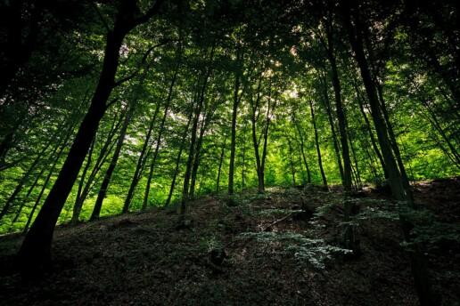Landscape Photograhy, Landscape, Photo, Photography, Landscape Photo, Landscapes Photos